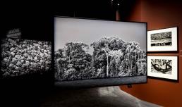 Sebastião Salgado. Amazônia | photo © Musacchio, Ianniello, Pasqualini & Fucilla, courtesy Fondazione MAXXI