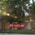 BoaMistura_Mi_Raiz_Es_LaHabana_Cuba_2015_03.jpg